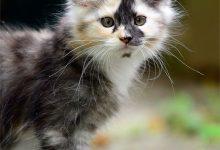 Fotos Von Babykatzen 220x150 - Fotos Von Babykatzen