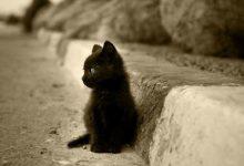 Fotos Von Katzenbabys 220x150 - Fotos Von Katzenbabys