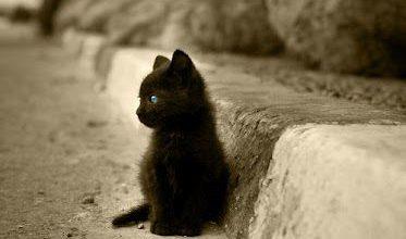Fotos Von Katzenbabys 373x220 - Fotos Von Katzenbabys