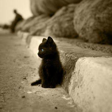 Fotos Von Katzenbabys | Bilder und Sprüche für Whatsapp ...