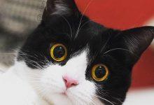 Freche Katzenbilder 220x150 - Freche Katzenbilder
