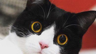 Freche Katzenbilder 390x220 - Freche Katzenbilder