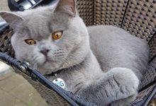 Free Cat Photos Bilder 220x150 - Free Cat Photos Bilder