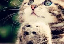 Free Kitty Pictures Bilder 220x150 - Free Kitty Pictures Bilder