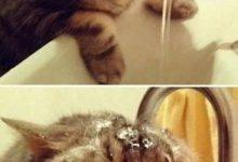 Funniest Cat Images Bilder 220x150 - Funniest Cat Images Bilder