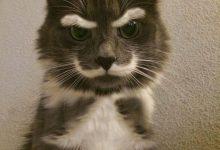 Funniest Cat Photo Ever Bilder 220x150 - Funniest Cat Photo Ever Bilder
