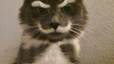 Funniest Cat Photo Ever Bilder 390x220 - Funniest Cat Photo Ever Bilder