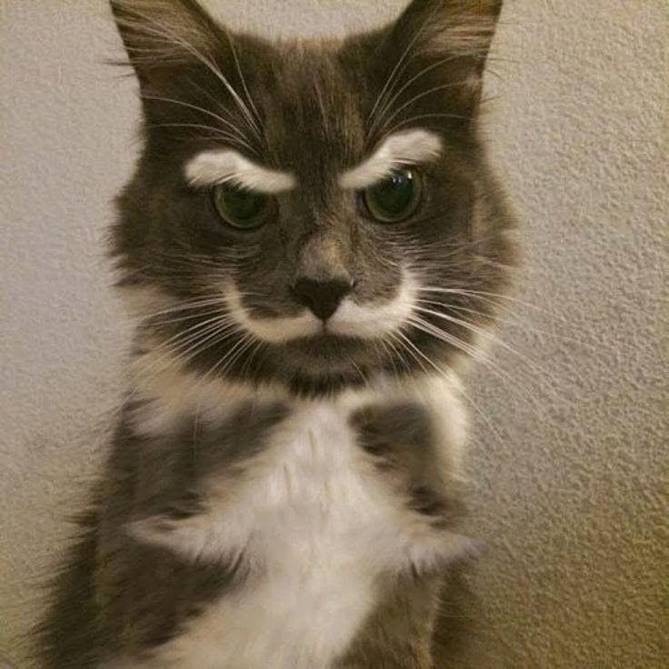 Funniest Cat Photo Ever Bilder - Funniest Cat Photo Ever Bilder