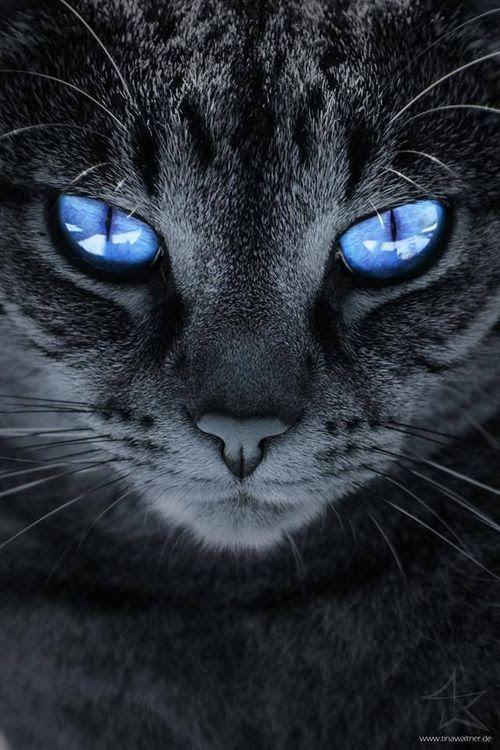 Funniest Cat Photos Bilder - Funniest Cat Photos Bilder