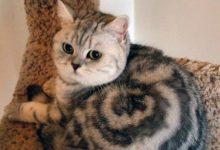 Funniest Cat Picture Ever Bilder 220x150 - Funniest Cat Picture Ever Bilder