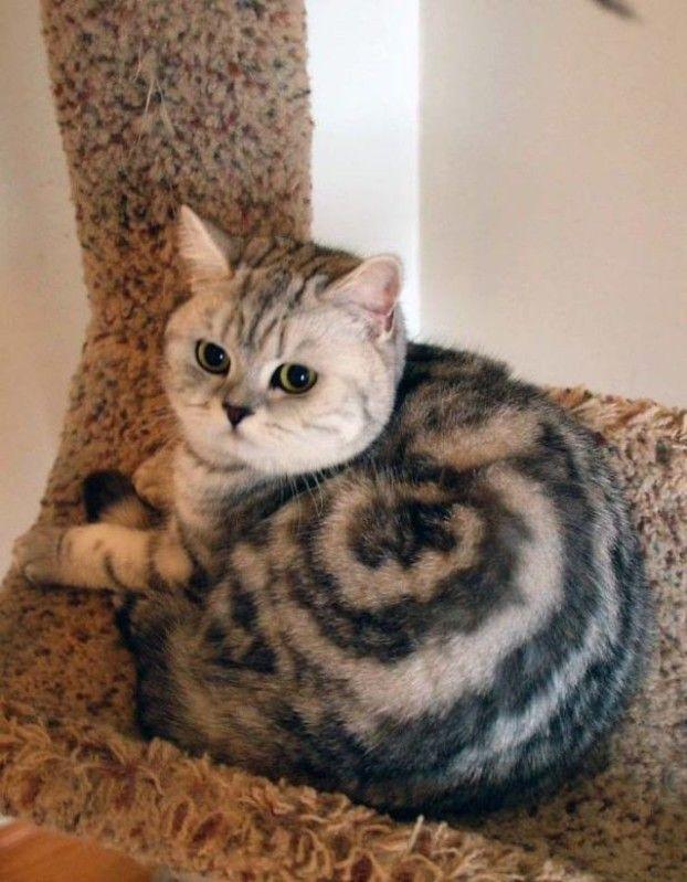 Funniest Cat Picture Ever Bilder - Funniest Cat Picture Ever Bilder