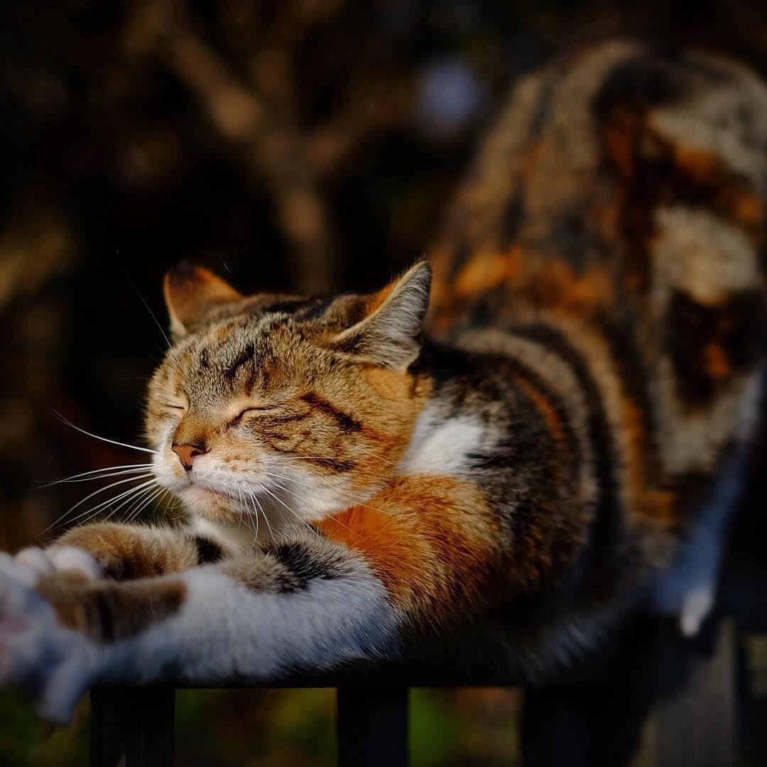 Funny Cat Illustrations Bilder - Funny Cat Illustrations Bilder