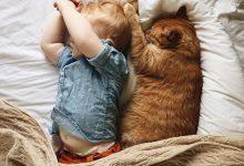 Funny Cat Images Hd Bilder 220x150 - Funny Cat Images Hd Bilder