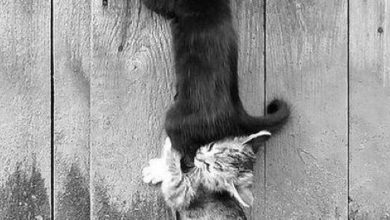 Funny Cat Images With Quotes Bilder 390x220 - Funny Cat Images With Quotes Bilder