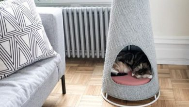 Funny Cat Photos With Captions Bilder 390x220 - Funny Cat Photos With Captions Bilder