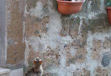Funny Cat Pics And Quotes Bilder 220x150 - Funny Cat Pics And Quotes Bilder