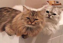 Funny Cat Pics With Quotes Bilder 220x150 - Funny Cat Pics With Quotes Bilder