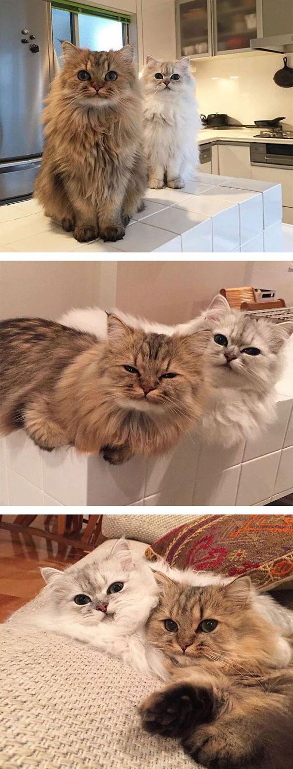 Funny Cat Pics With Quotes Bilder - Funny Cat Pics With Quotes Bilder