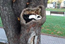 Funny Cat Pics With Words Bilder 220x150 - Funny Cat Pics With Words Bilder