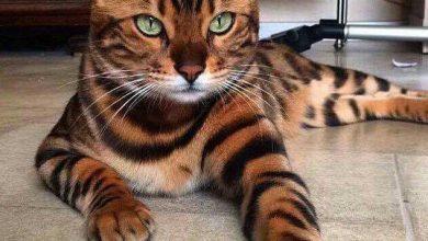 Funny Cat Pictures Hd Bilder 390x220 - Funny Cat Pictures Hd Bilder