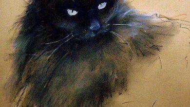 Funny Cat Posts Bilder 390x220 - Funny Cat Posts Bilder