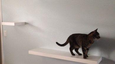 Funny Cats Bilder 390x220 - Funny Cats Bilder