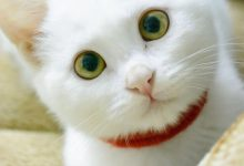 Funny Cute Cat Pictures Bilder 220x150 - Funny Cute Cat Pictures Bilder