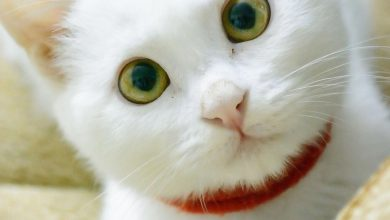 Funny Cute Cat Pictures Bilder 390x220 - Funny Cute Cat Pictures Bilder