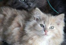 Funny Friday Cat Pictures Bilder 220x150 - Funny Friday Cat Pictures Bilder