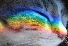 Funny Kitten Pics Bilder 220x150 - Funny Kitten Pics Bilder