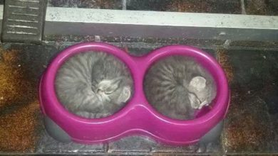 Funny Kitten Pictures With Captions Bilder 390x220 - Funny Kitten Pictures With Captions Bilder