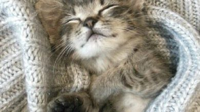 Funny Kitten Pictures With Quotes Bilder 390x220 - Funny Kitten Pictures With Quotes Bilder