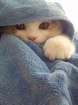 Geburtstag Bilder Mit Katze Bilder Kostenlos - Geburtstag Bilder Mit Katze Bilder Kostenlos