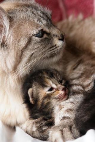 Postkarte Herzl Gluckwunsch Katzen Geburtstag Karten