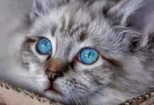 Geburtstagsbild Mit Katze 220x150 - Geburtstagsbild Mit Katze