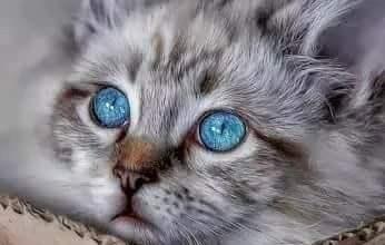 Geburtstagsbild Mit Katze 346x220 - Geburtstagsbild Mit Katze