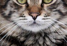 Geburtstagsbilder Katzen 220x150 - Geburtstagsbilder Katzen