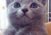 Geburtstagswünsche Katzenbilder 220x150 - Geburtstagswünsche Katzenbilder