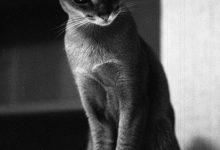 Gemälde Mit Katzen Bilder Kostenlos 220x150 - Gemälde Mit Katzen Bilder Kostenlos