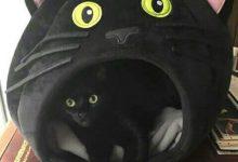 Gemälde Von Katzen 220x150 - Gemälde Von Katzen