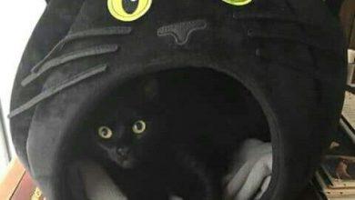 Gemälde Von Katzen 390x220 - Gemälde Von Katzen