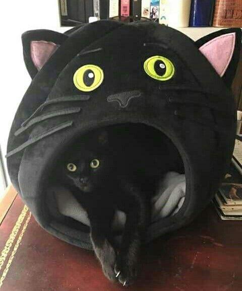 Gemälde Von Katzen - Gemälde Von Katzen