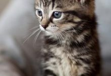 Gemalte Katzenbilder 220x150 - Gemalte Katzenbilder