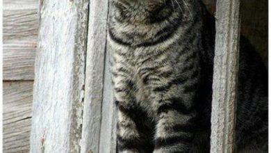 Get Well Cat Images Bilder 390x220 - Get Well Cat Images Bilder