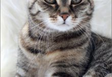 Get Well Cat Pictures Bilder 220x150 - Get Well Cat Pictures Bilder