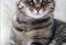 Get Well Cat Pictures Bilder 220x150 - Get Well Cat Pictures Bilder