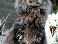 Getigerte Katzen Bilder 200x150 - Getigerte Katzen Bilder