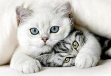 Gezeichnete Katzenbilder 220x150 - Gezeichnete Katzenbilder