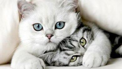 Gezeichnete Katzenbilder 390x220 - Gezeichnete Katzenbilder
