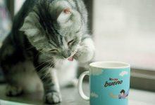 Gif Bilder Katzen 220x150 - Gif Bilder Katzen